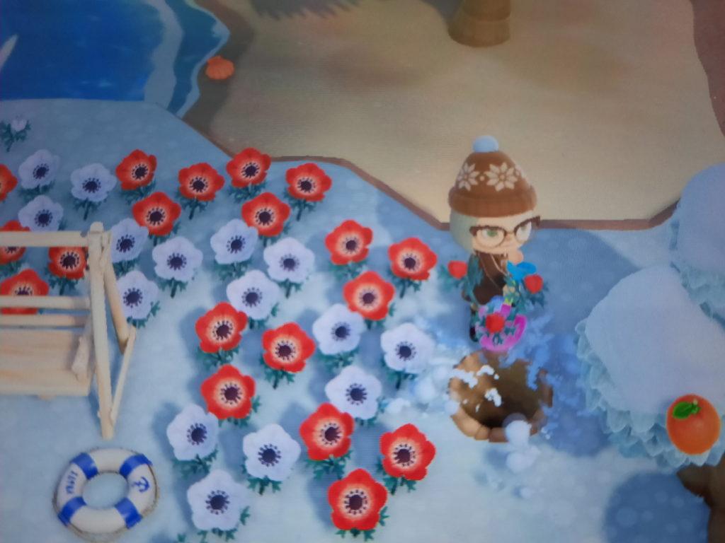 Animal-Crossing-Screenshot, der meinen Spielcharakter in dicker warmer Winterkleidung beim Ausgraben einer Blume zeigt.