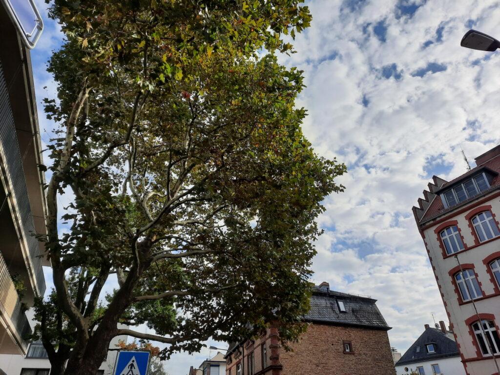 Eine Baumkrone vor einem sehr bewölktem Himmel und ein einzelner Sonnenstrahl, der auf die Blätter trifft, - anhand der Hausfassaden rechts und links kann man erahnen, dass es eine sehr schmale Straße ist.